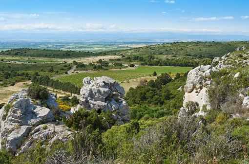 La Vendemiaire, Languedoc Wine